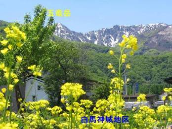 Shinshu photo
